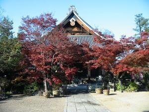20081123_gyoda1ban