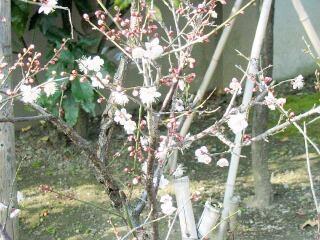 20090107_tenjin