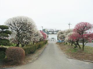 20090308_enkaku38_2