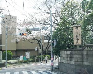 20090328_toshima01_sakura