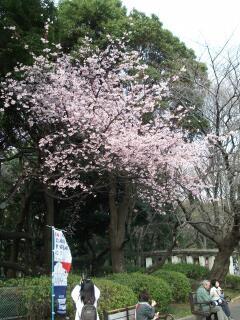 20100312_sakura