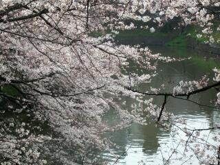 20100329_sakura1