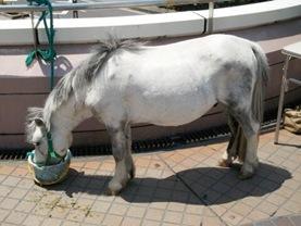 20100609_pony