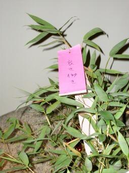 20100707_tanabata