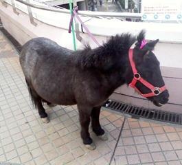 20101016_pony