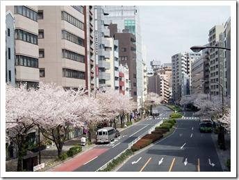 20110410_hanami
