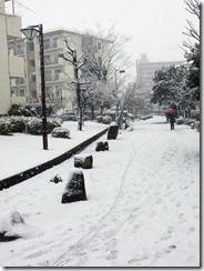 20130114_snow