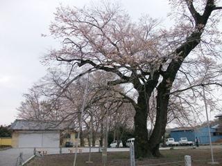 20130330_sashima27_03